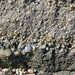 Graded bedding in conglomerate & pebbly sandstone (