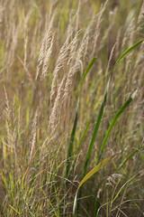 Autumn at the Lake (Keith Levit) Tags: autumn ontario canada nikond850 lakeofthewoods