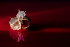 sidelighting (tersha53) Tags: red seed sidelighting macromondays