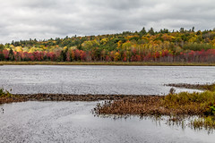 The beaver dam on Buckshot Lake (Sharon's Shotz) Tags: sharonsshotz sharonsshotzphotography sigma18200 sigma18200mm autmn fall nature