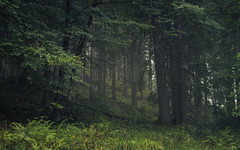 Old alpine Forest (Netsrak) Tags: alpen nebel wald baum bäume berg berge gebirge mist fog green natur kleinwalsertal mittelberg österreich at