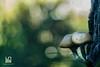CHIODINI (Lace1952) Tags: bosco sottobosco autunno fungo tronco chiodini luce effetto bokeh sfocato bolle panasoniclumix