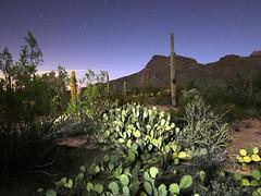 Desert at night (JoelDeluxe) Tags: saguaro national park border crickethead inn tucson az arizona cacti landscape bednbreakfast nighttime long exposures stars wideopen skies joeldeluxe