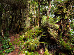 Mossy forest (whitworth images) Tags: jungle path moss asia gunungjasar southeastasia mtjasar cameronhighlands brinchang wet malaysia trees trail track damp forest tanahrata mountjasar outdoors green primeval pahang mossy nature