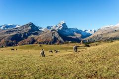 Piz Platta: Postcard mood (2/2) (jaeschol) Tags: alpflix europa graubuenden grischuna kantongraubünden kontinent schweiz suisse surses switzerland sur graubünden ch