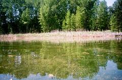 5.2017 LLWM W Branch Little Spokane Wildife Area  N. C41 CPS0014 (Jcicely) Tags: 2017 easternwashington kayaking loonlake loonlakewithmarvin may reeds trees water