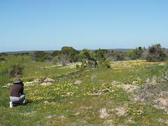 P9160006 Mum photographing West Coast National Park Flowers (Joanna P Dale) Tags: westcoastnationalpark flowers southafrica omdem1 mk1 olympus 35mmzuiko 35mmmacro