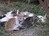 P1030030 (amalia_mar) Tags: 7dwf animals cats fauna