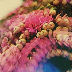 (meeeeeeeeeel) Tags: pink beadfilter glassfilter experimental filter flower abstract surreal kalanchoe flowers flores flor iphoneography garden jardim nature natureza