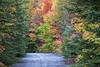 old highway 17, aweres township (twurdemann) Tags: abandoned autumnawerestownship canada derelict fall2017 forest fujixt1 heyden highway17 landscape leaves northernontario ontario scenic trees viveza xf55200mm