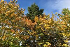 2017-10-09 (Day 282) Back Garden Trees