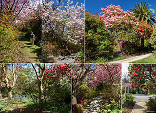 Spring Time in Christchurch