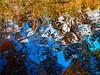 Autumn  Reflections (Ostseetroll) Tags: deu deutschland geo:lat=5418526007 geo:lon=1064410445 geotagged kirchnüchel schleswigholstein ukleisee herbst autumn wasser water spiegelungen reflections