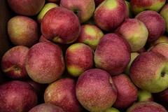 August Apples, Portland (Eric Seibert) Tags: ericseibert fallharvest freshfruit ilovemaine red