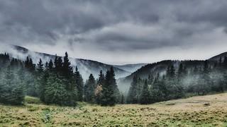 Blur rainy landscape