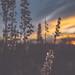 Prairie View Sunset, Buffalo River State Park, Minnesota