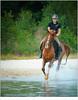 Eureko (nandOOnline) Tags: a9 autofocus cameraland eureko ilce9 mirrorless nederheide nicol paard paarden paardrijden review sony stippelberg