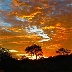 IMG_1047 (michael.gittos) Tags: sunset katatjuta australia sky landscape dusk tree