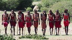 Masai Mara - Day 3 (lens buddy) Tags: masaimara africa kenya safari wild wilderness animal masaiwarriors