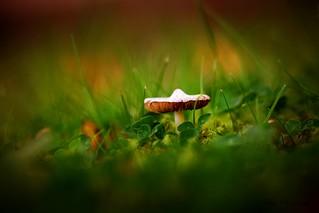 In the fairy garden....