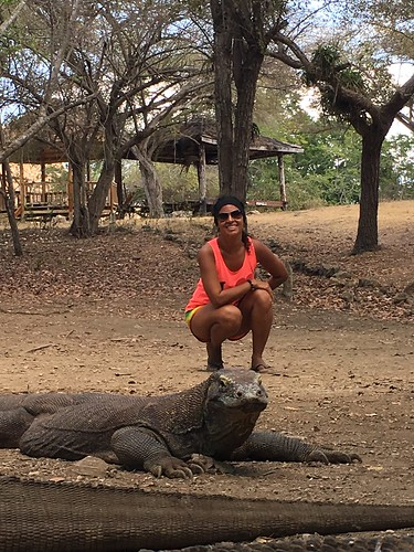 The Komodo dragons are the largest living species of lizard, growing to a maximum length of 3 metres (10 ft). They have a venomous bite.  Rinca island. Komodo National Park. Indonesia  Sept 2017 #itravelanddance