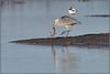 Grey Heron (image 2 of 3) (Full Moon Images) Tags: rspb frampton marsh wildlife nature reserve bird grey heron fish roach