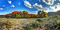 cottonwood color along Rio Chama Valley (JoelDeluxe) Tags: chama river valley abiquiu october 2017 fall colors hdr panorama landscape nm newmexico joeldeluxe