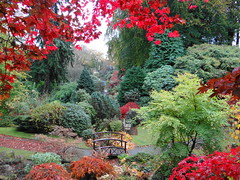 Autumn in Aberdeen (Ian Robin Jackson) Tags: aberdeen johnstongardens autumn fall colours sony zeiss light 2017 october aberdeenshire scotland park tree city urban citypark