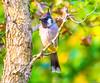 _MRA8062 (Mohsan Raza Ali Baloch) Tags: mohsans mohsan raza ali islamabad pakistan birds nature flowers birdlover wild wildlife animal migratory