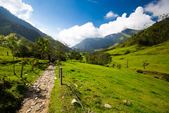 Vallée de Cocora (Voyages Lambert) Tags: rainforest latinamerica nopeople grass scenics backgrounds indigenousculture nature tree season andes mountainrange mountain valley tropicalrainforest forest salento suramerica cocoravalley cocora