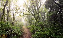 Bosque de la Niebla 3 (PictureJem) Tags: arboles paisaje niebla naturaleza