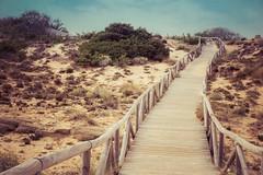 Fenced friday - Fenced dunes (marysaesteban) Tags: 2017 atlántico barbate cabodetrafalgar cádiz españa fences spain zahora arena dunas dunes julio july sand summer valla fencedfriday