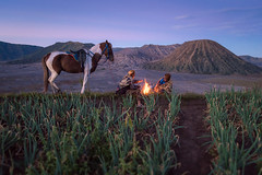 Men from the Tengger tribe in an onion field (angesvdlogt.photography) Tags: ifttt 500px campfire sunrise volcano indonesia mountain men national park bromo caldera east java tengger
