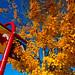edgemont-village-fall-DSC_9208