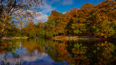 Autumn's splendour (SpectrumLight) Tags: landscape water lake pond england kent autumn fall waterscape reflections scenic sonynex5n sony tree foliage sky seasons 4seasons splendor color colour explore