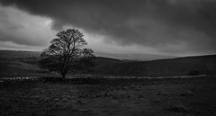I think it's going to rain! (Ian Emerson) Tags: stormy storm tree wall derbyshire valley landscape outdoor canon clouds blackwhite hills weather october autumn