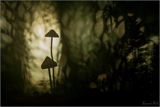 tableau de la forêt (9)
