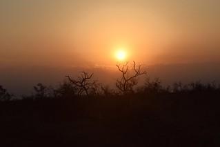 A Wild Sunrise