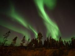 Northern Lights (Aurora Borealis) (Helena Normark) Tags: auroraborealis northernlights aurora nordlys norrsken heimdal sørtrøndelag norway norge sonyalpha7 a7 voigtländersuperwideheliar15mmf45asphericaliii voigtlander15mmf45 heliar15mm