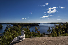 View for the birds (mystero233) Tags: muskoka ontario canada lakes lake water north america park tree forest cottage seagull bird sit view landscape outdoor nature day autumn sunny cold blue sky