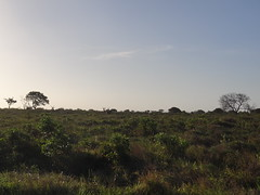 iSimangaliso Wetland Park - St. Lucia
