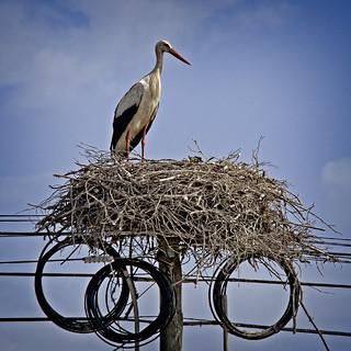 Stork Phone Home