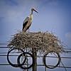 Stork Phone Home (MrBlueSky*) Tags: stork bird nest wildlife nature colour comporta alentejo portugal kingdomanimalia travel canon canoneos canonm6 coth5