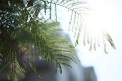 馬祖新村_18 (Taiwan's Riccardo) Tags: 2017 taiwan digital color dslr nikondf nikonlens seriese fixed 50mmf18 桃園縣 中壢 龍岡 馬祖新村