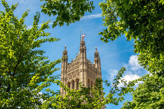 The End of the Urban Jungle (Emi Dragoi) Tags: westminster london uk parliament trees forest tower bluesky sky