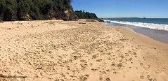 Jenny Dixons Beach looking North, Norah Head, Central Coast, NSW (Black Diamond Images) Tags: jennydixonsbeach jennydixonbeach norahhead noraville toukley centralcoast nsw beach australianbeaches iphone appleiphone7plus iphone7plus panorama appleiphone7pluspanorama iphone7pluspanorama iphonepanorama