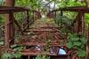 Greenbridge 😉 (Ricksen jK) Tags: color farbe grün germany photografie natur fluss brücke river photograph water bridge forest nature bode landscape
