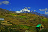 Beneath the mountains... (Lopamudra !) Tags: lopamudra lopamudrabarman lopa landscape mountain mountains lahul lahaul tandi hamlet valley vale himalaya himalayas highaltitude highland himachal himachalpradesh hp verdant colour color colours colourful peak peace picturesque picture