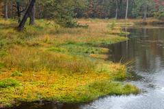 All those colors (Pieter ( PPoot )) Tags: herfst autumn colors kleuren