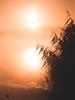 Vibrations of light (Karsten Gieselmann) Tags: 40150mmf28 bavaria em5markii germany mzuiko microfourthirds nebel olympus orange schwandorf schwarz seeteichweiher steinbergersee wetter black fog kgiesel lake m43 mft mist pond weather steinbergamsee bayern deutschland sonnenaufgang sunrise monochrome